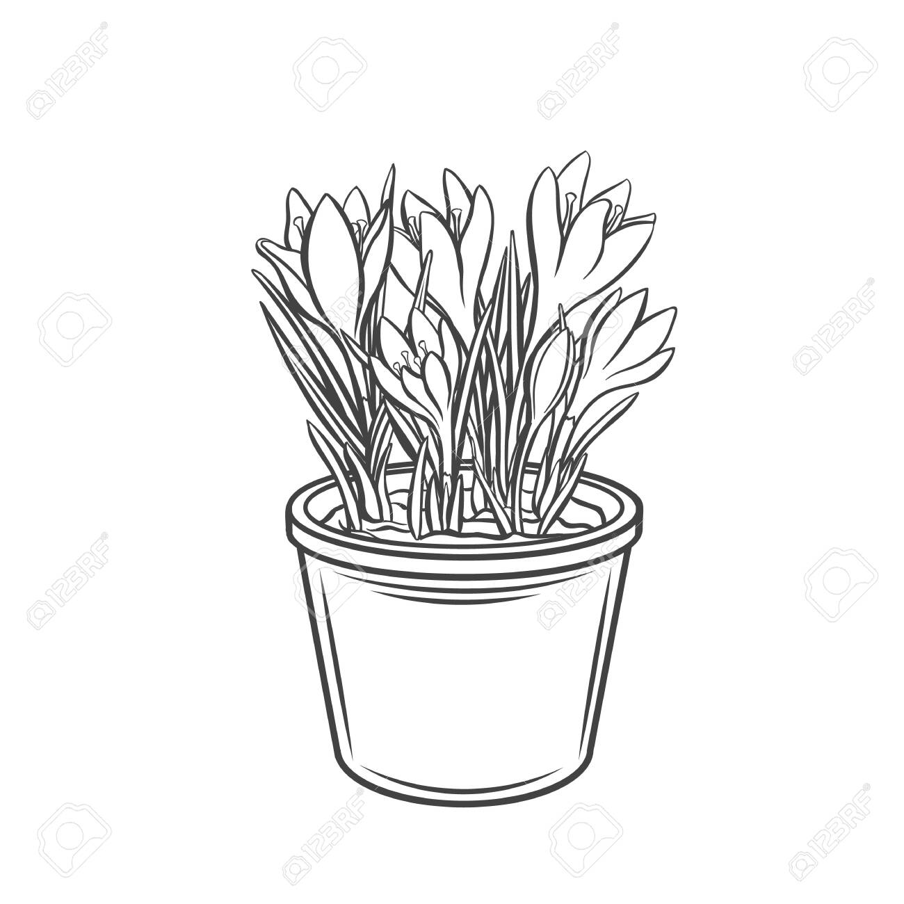 Crocus In A Pot Outline Icon Drawing Garden Flowers For Gardening Royalty Free Cliparts Vectors And Stock Illustration Image 148571206
