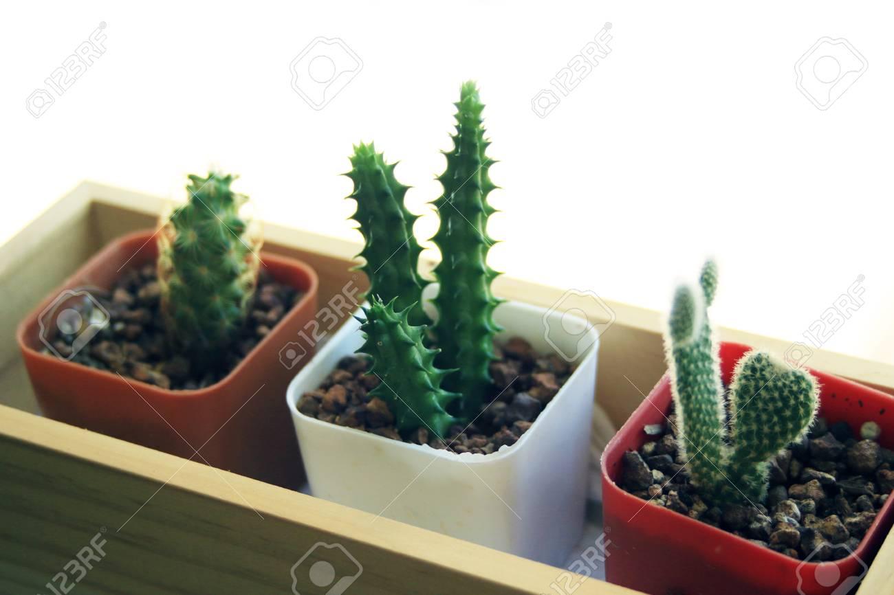 Planta De Decoracin De Olla De Cactus En El Interior De La Oficina