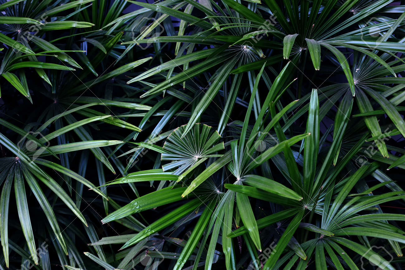 palm tree leaves tropical natural background green leaves pattern