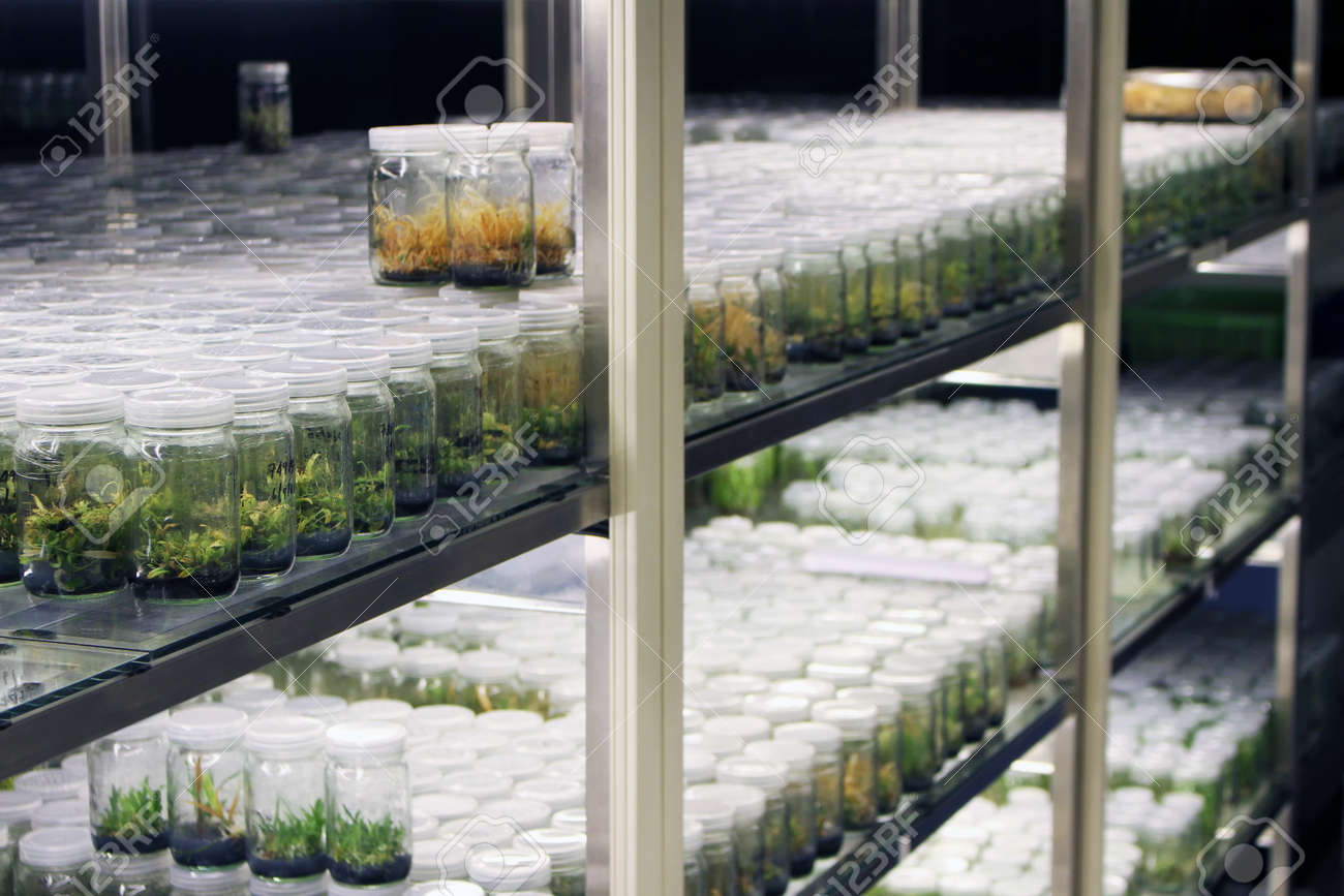 Plant tissue culture collection shelves in tissue culture room