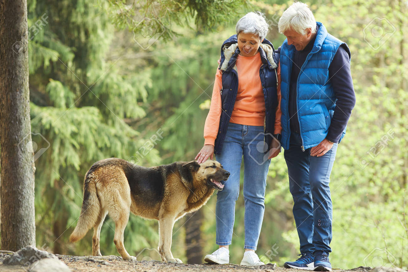 Full length portrait of active senior couple petting big shepherd dog while hiking in sunlit forest - 149856245
