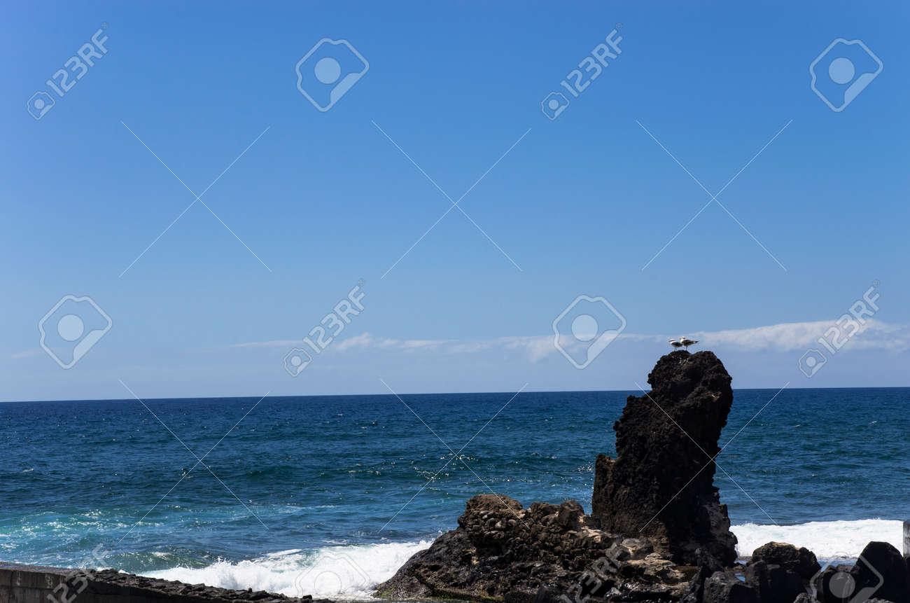 Seagulls are sitting on a rock near the sea coast - 157758142