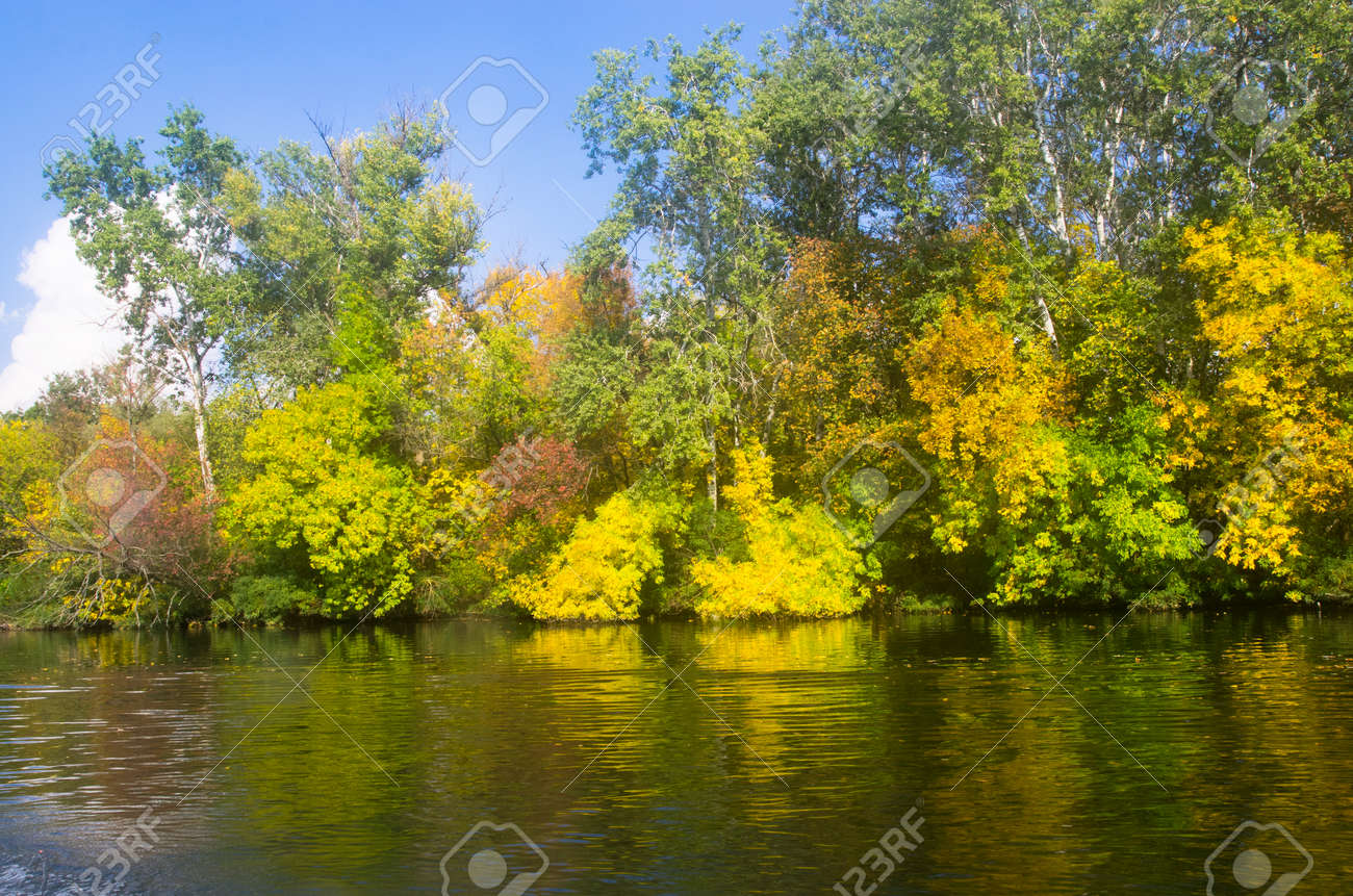 Trees by the river in autumn, landscape - 158123237