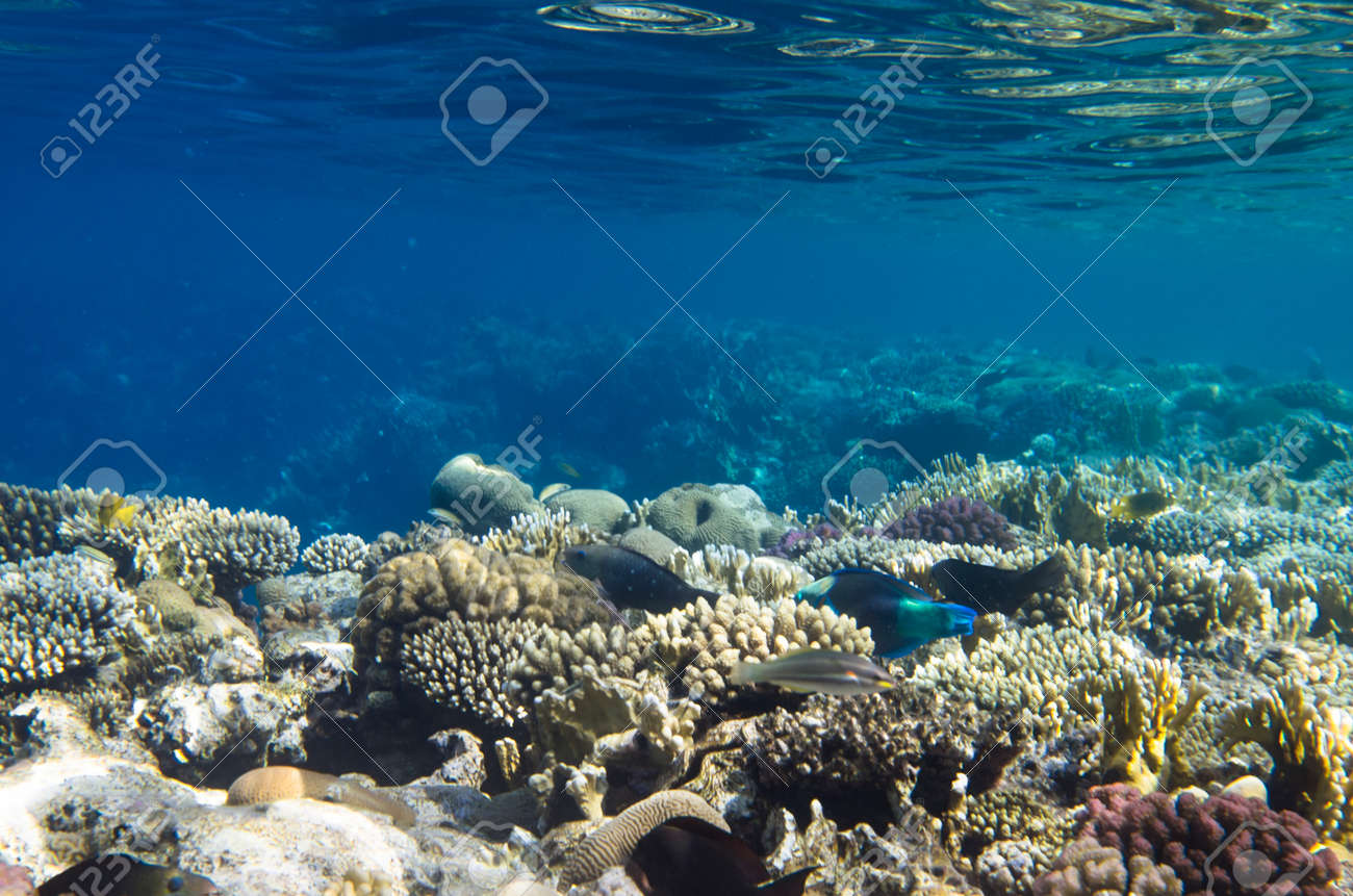Coral reef landscape under water and fish - 164268050