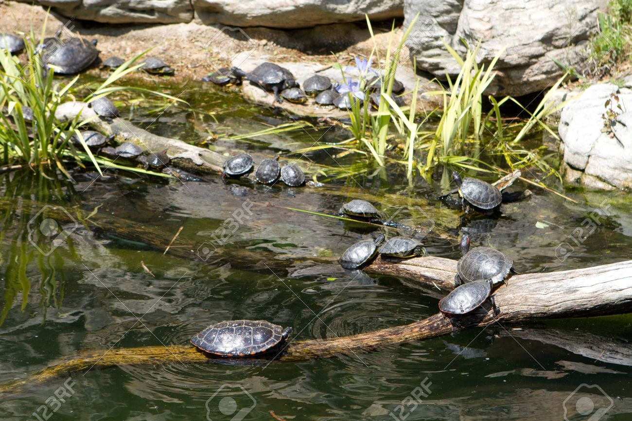 Como Construir Un Estanque Para Tortugas Fabulous Puedes Crear En - Como-construir-un-estanque-para-tortugas
