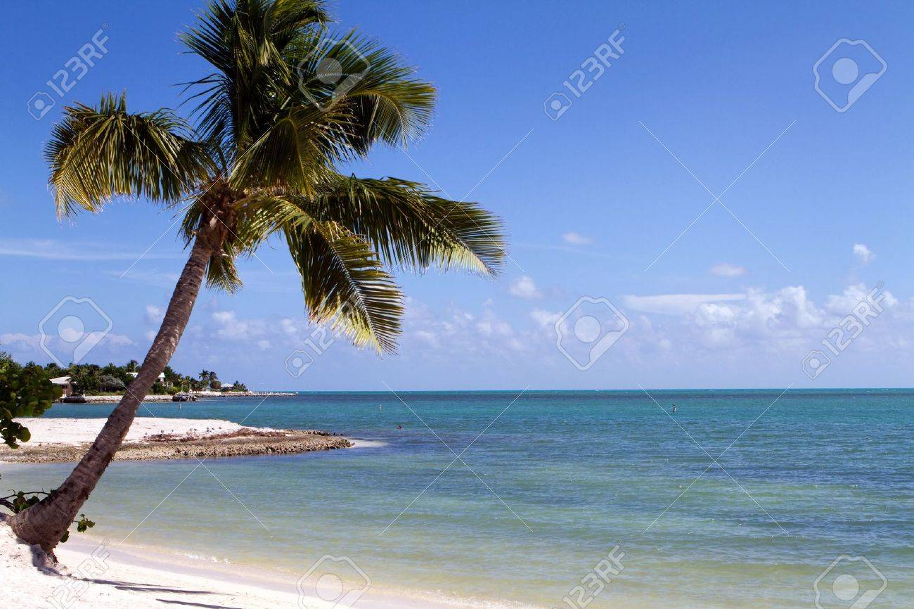 Tropical Palm Tree Hangs Over The Beach On Marathon Key In Middle Of Florida