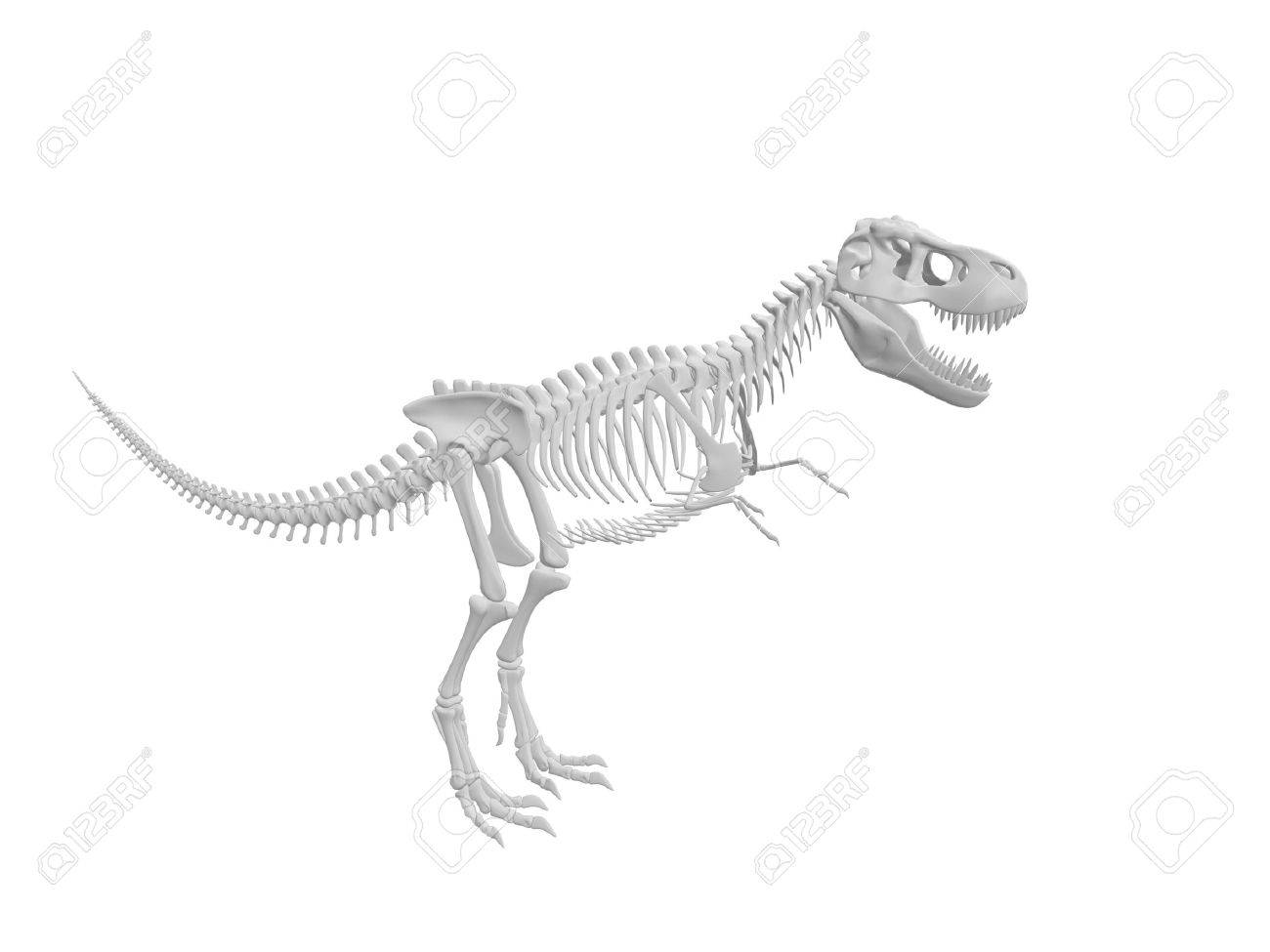 dinosaur skull stock photos u0026 pictures royalty free dinosaur