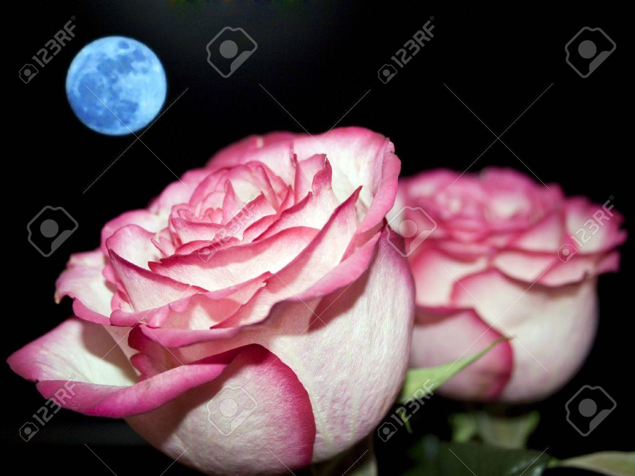 Planet of love - Valentine day event . Romantic beautiful rose on sky background Stock Photo - 4136868