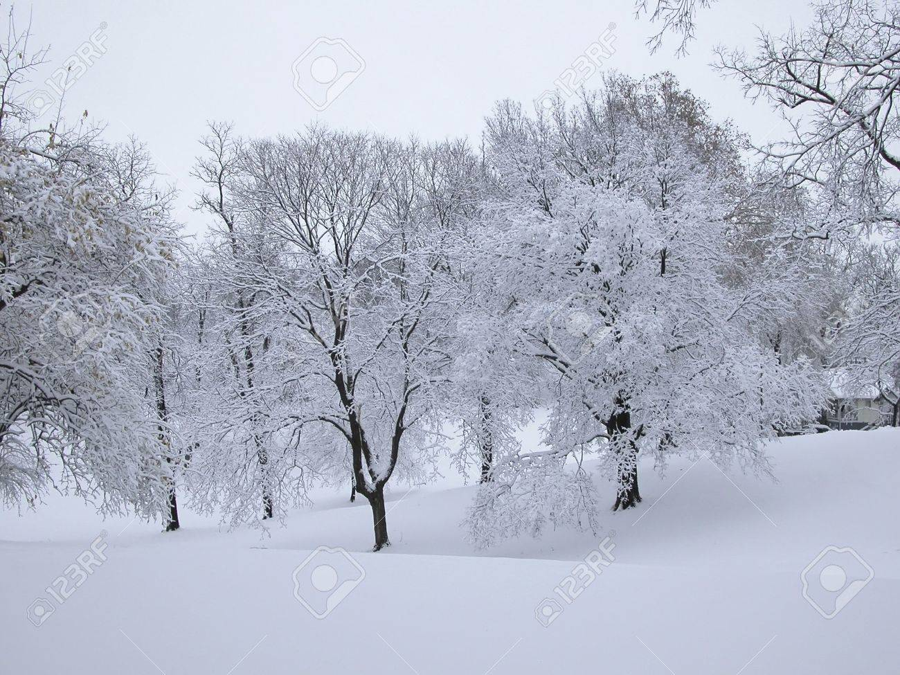 Snowy scene with hills and trees. Stock Photo - 2415093
