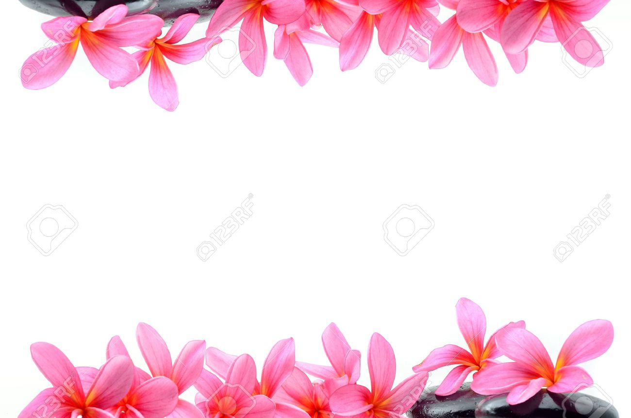 Beautiful Frangipani Flowers Border Design Stock Photo Picture