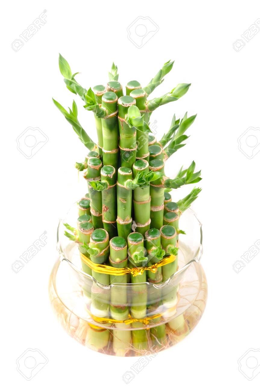 Ein Glucklicher Bambus Pflanze Auf Weissem Hintergrund Lizenzfreie