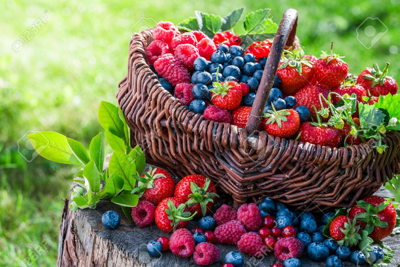 Healthy berries in sunny day - 43232282