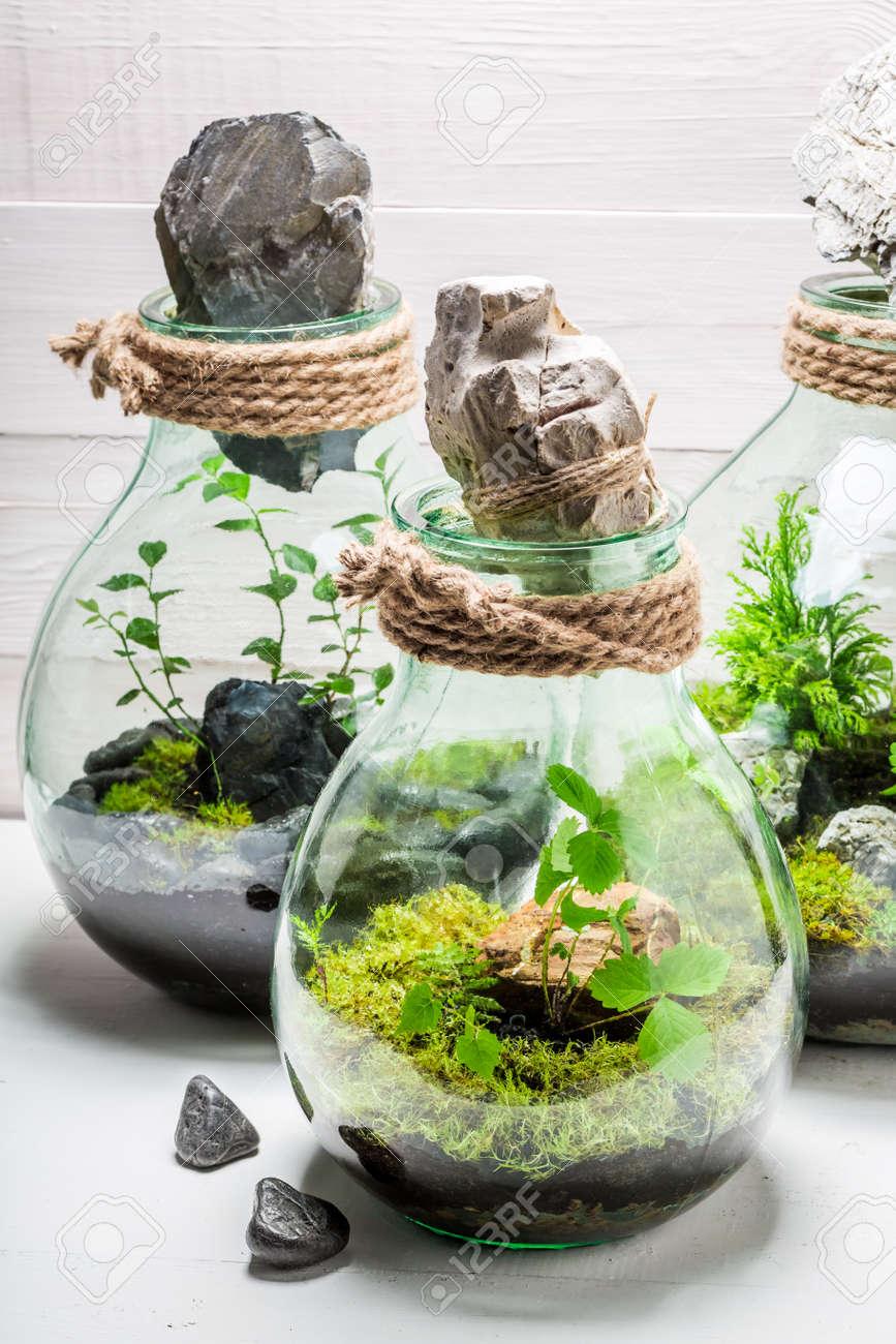 Schöne Lebende Pflanzen In Einem Glas Mit Selbstökosystem