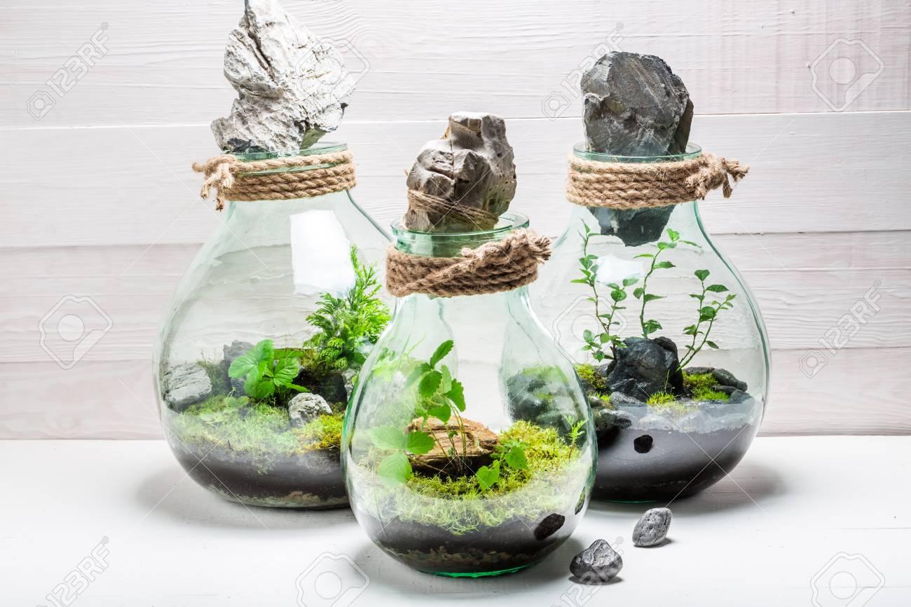 Wunderbare Lebende Pflanzen In Einem Glas Mit Selbst ökosystem