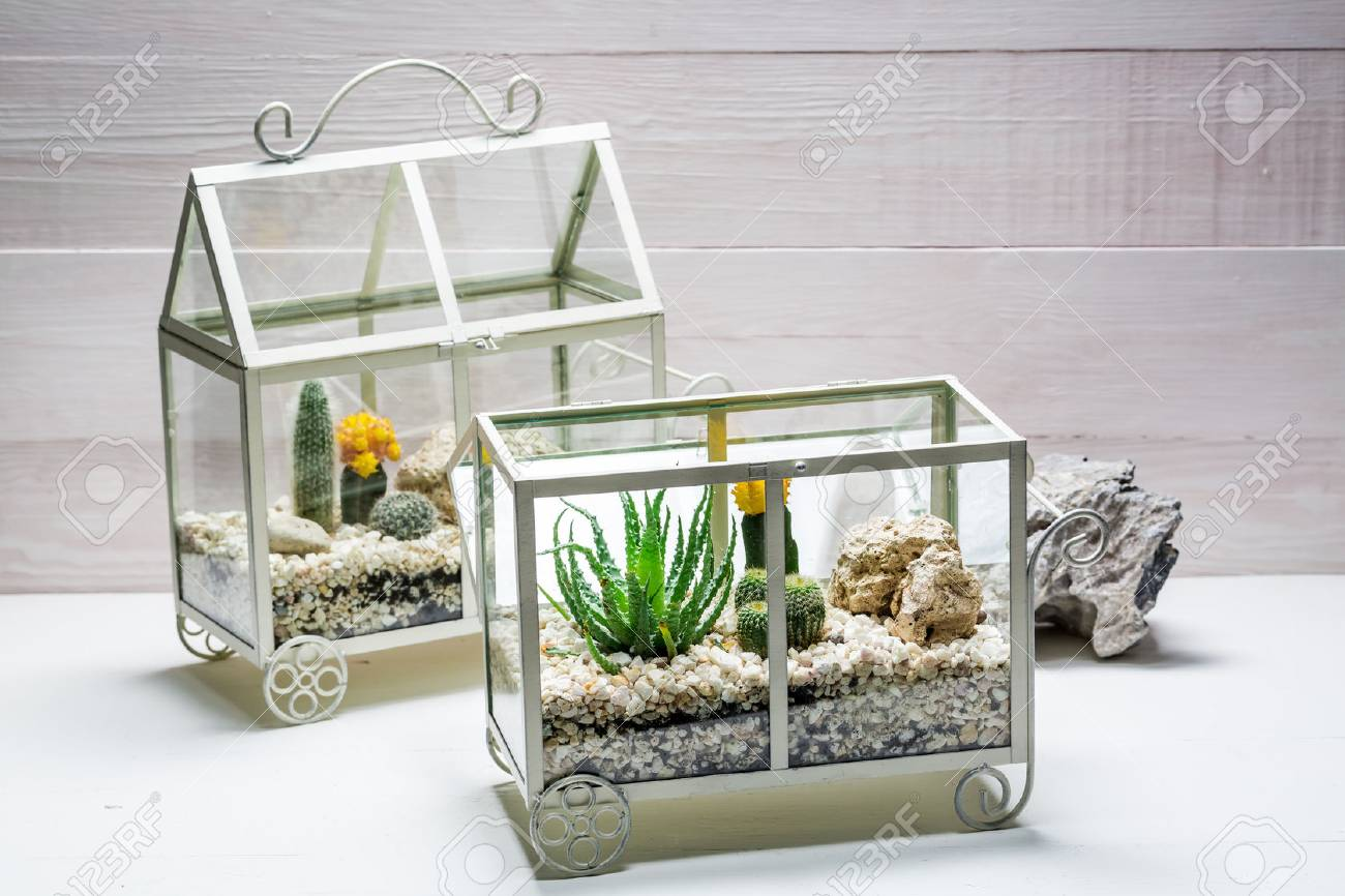 Small Live Cactus In A Small Terrarium Stock Photo Picture And