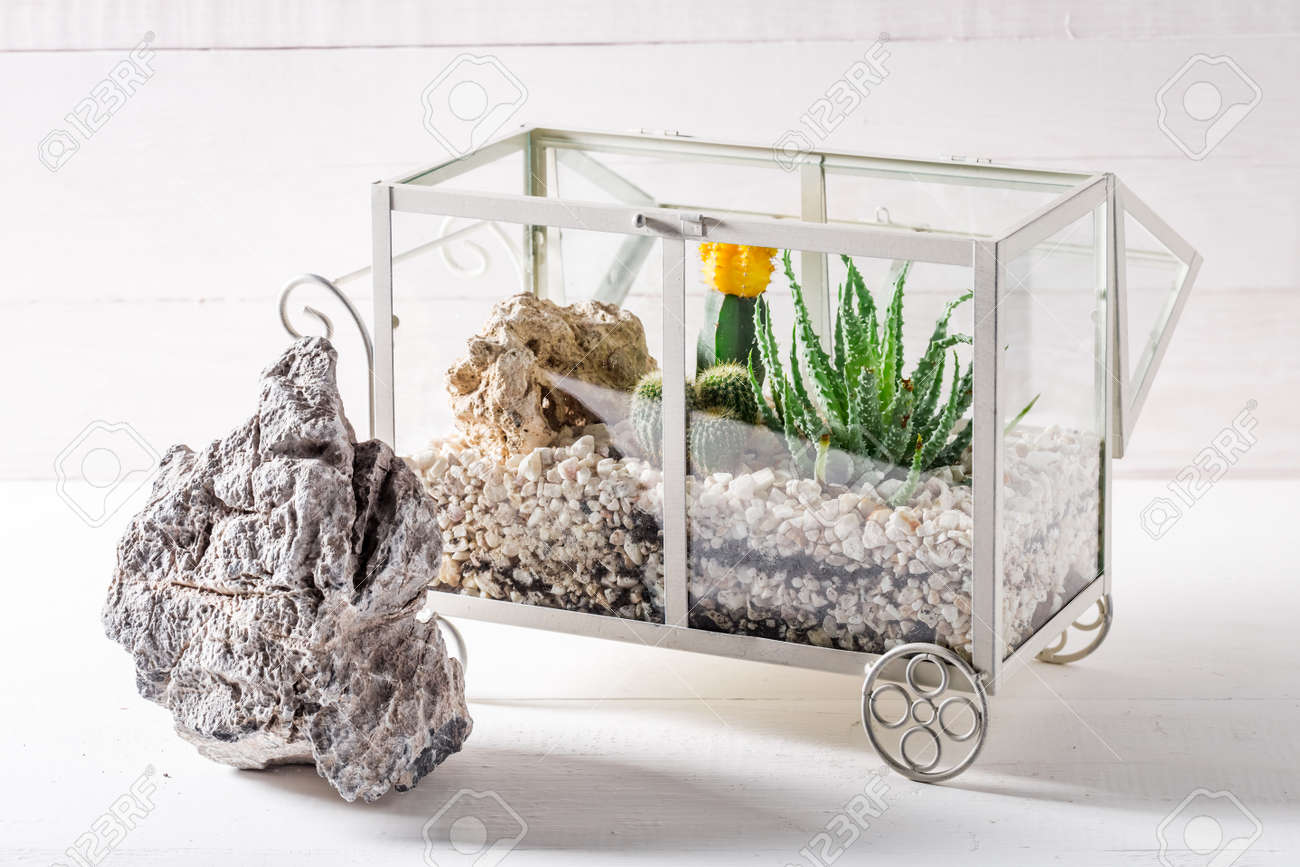 Small Terrarium With Cactus And Piece Of Desert Stock Photo Picture And Royalty Free Image Image 78527998