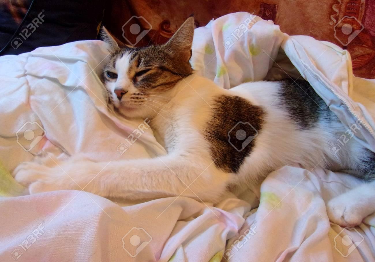 Immagini Stock Tv Maniac Cat Gatto Che Dorme E Abbracci Il