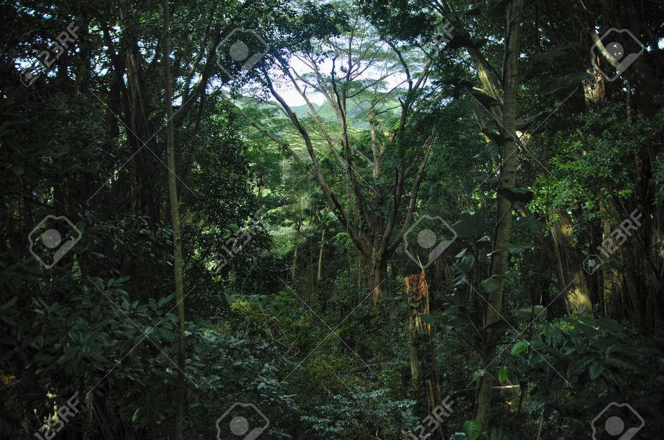 Tropical forest Stock Photo - 11552822
