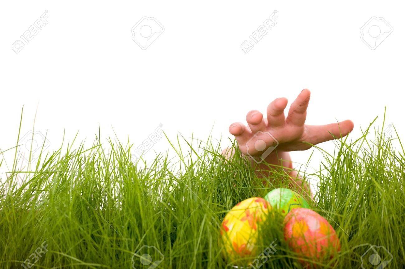 easter egg hunt kids hand and easter eggs hidden in fresh green grass isolated