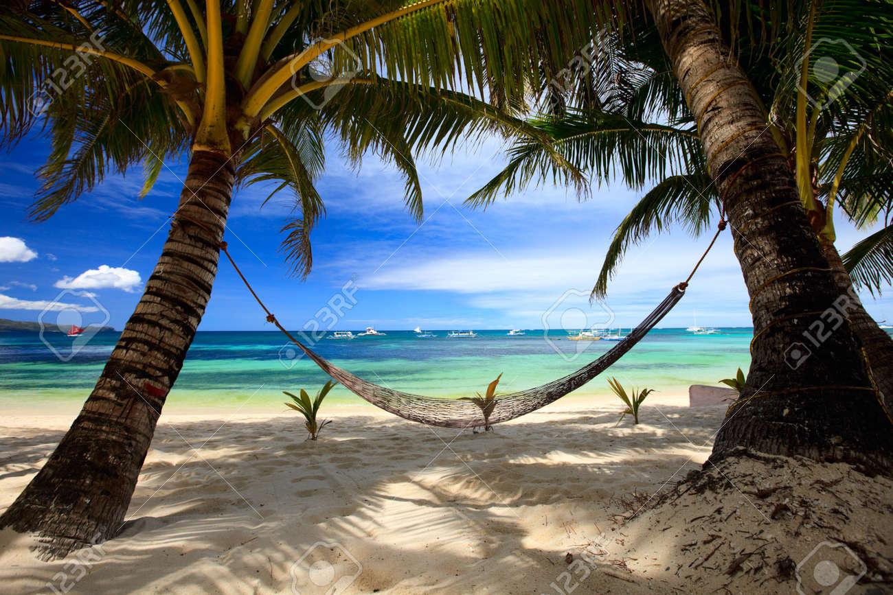 Hammocks on the beach - Hammock Beach Perfect Tropical Beach With Palm Trees And Hammock