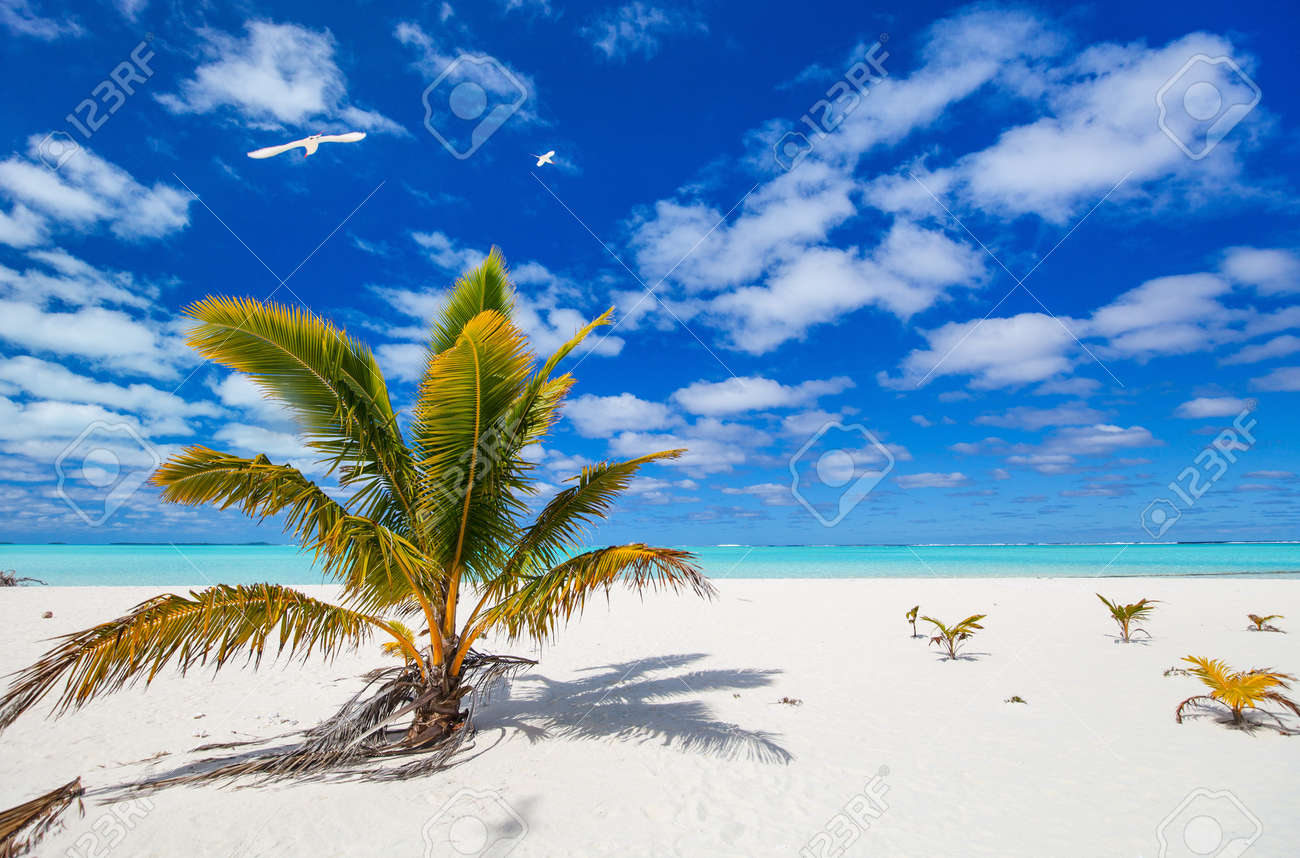Stunning Honeymoon Island Tropical Beach With Palm Trees White