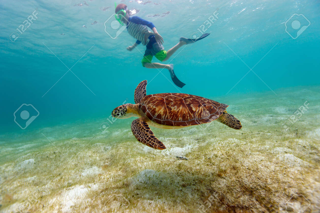 Underwater photo of boy snorkeling and swimming with Hawksbill sea turtle - 53163955