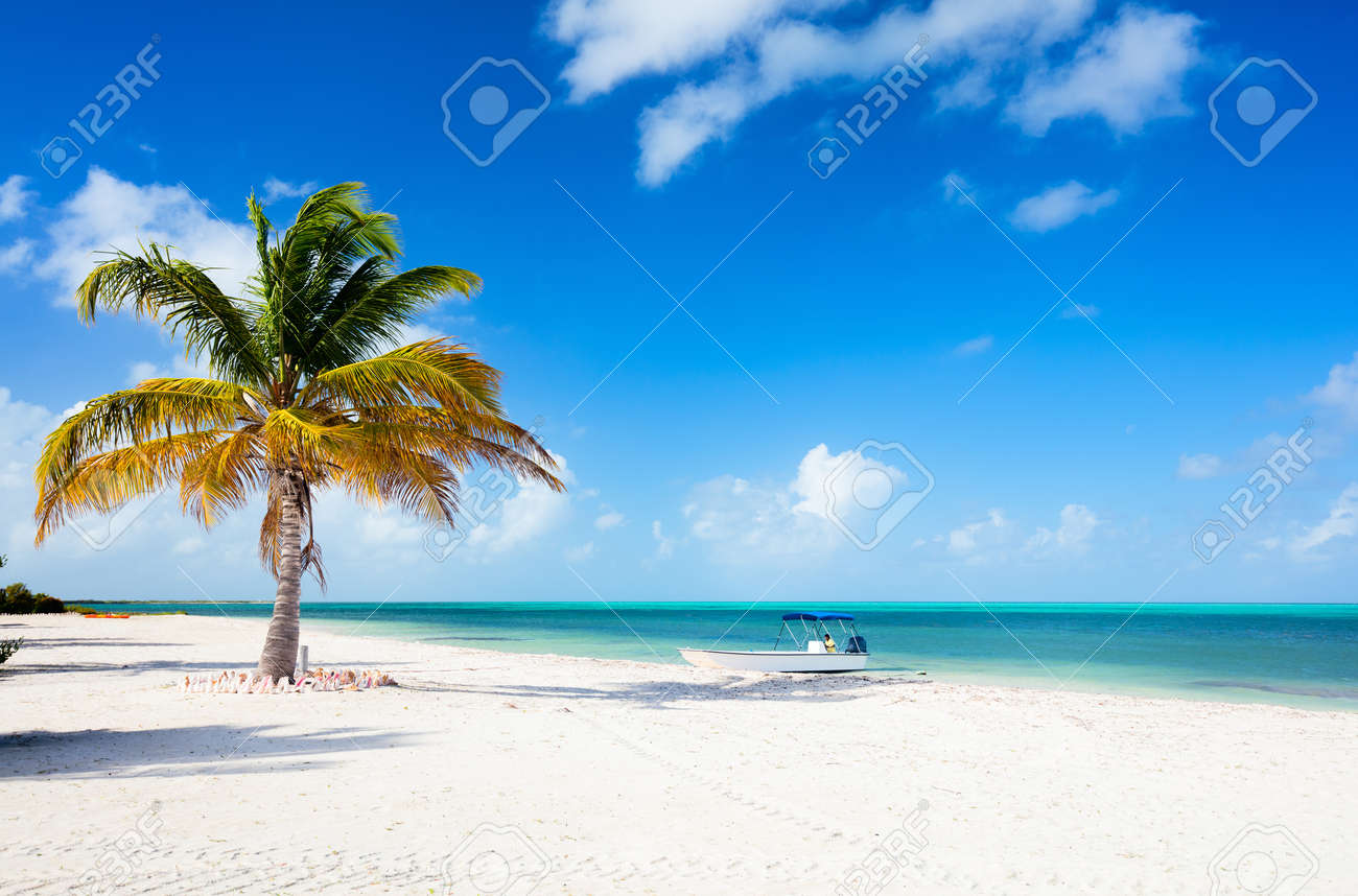 Idyllic tropical beach on Barbuda island in Caribbean with white sand, turquoise ocean water and blue sky - 55732108