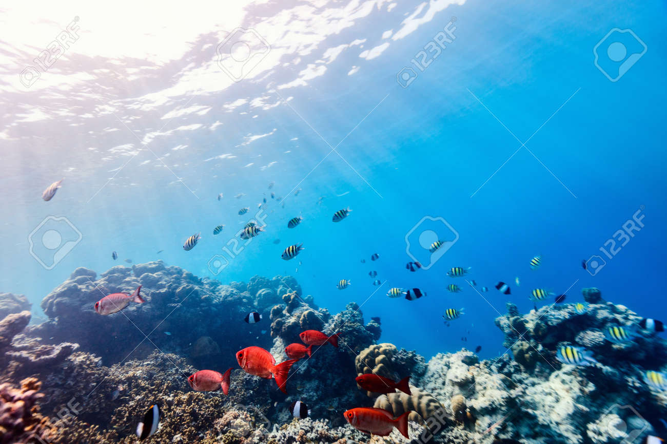 Beautiful Colorful Coral Reef And Tropical Fish Underwater In Maldives Stock Photo