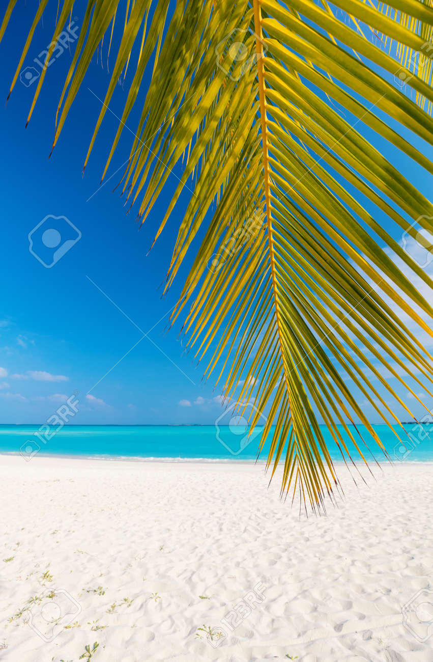 Perfect tropical white sand beach with coconut palm - 95992727