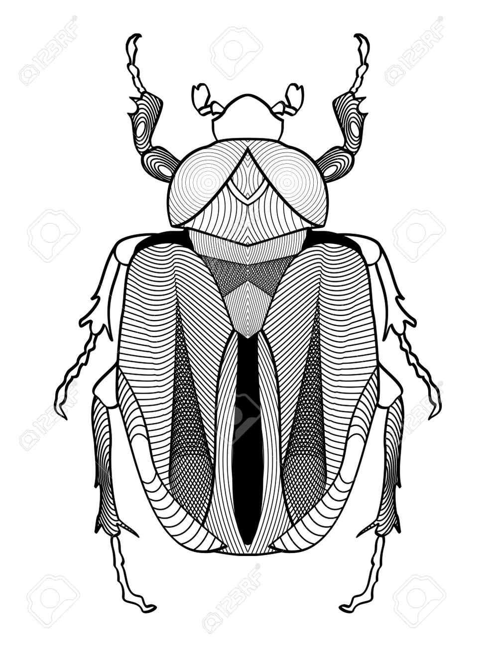 Kalli Käfer Zeichnung In Schwarz Und Weiß. Beetle Form Mit ...
