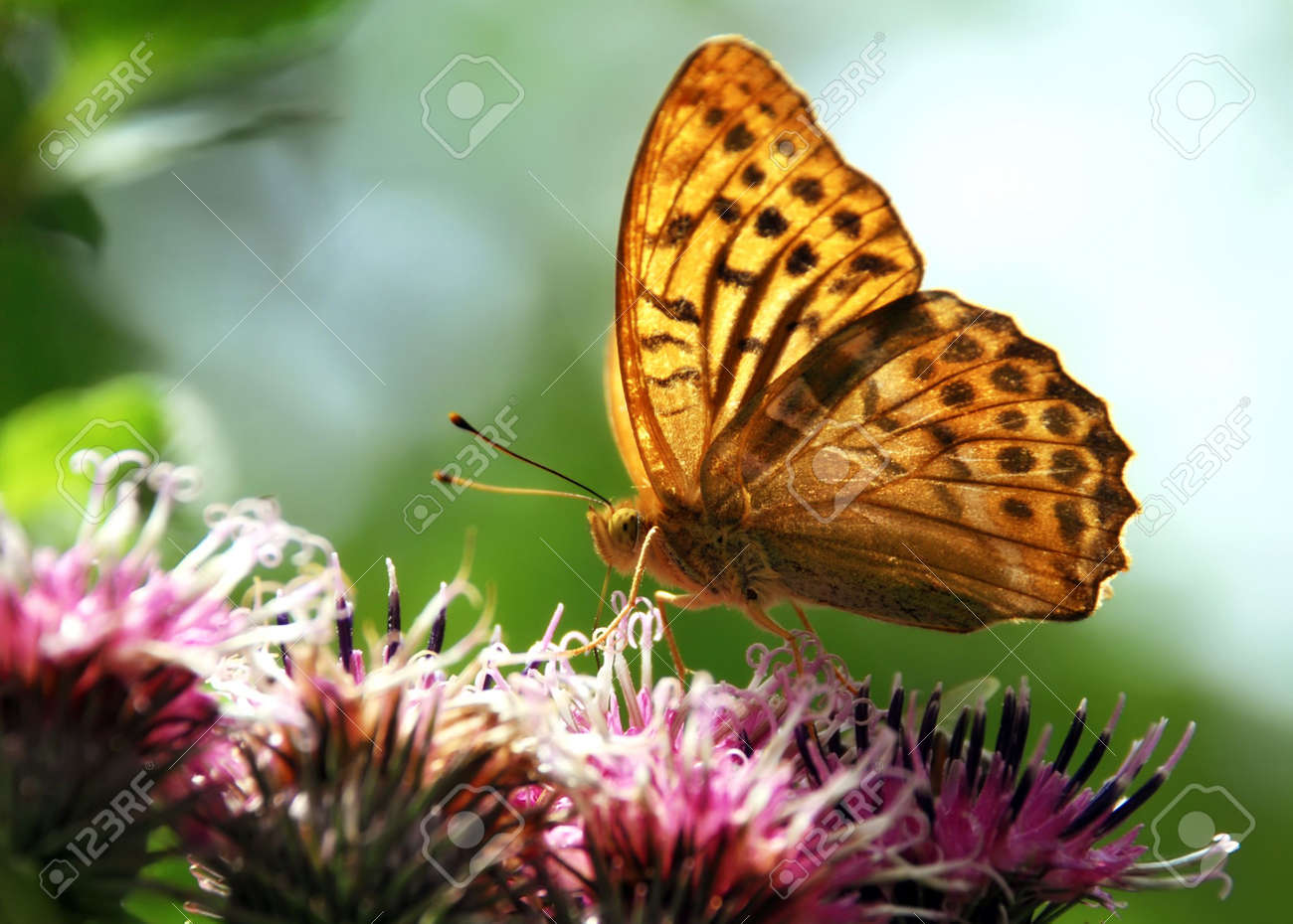beautiful nature scene butterfly on flower stock photo picture