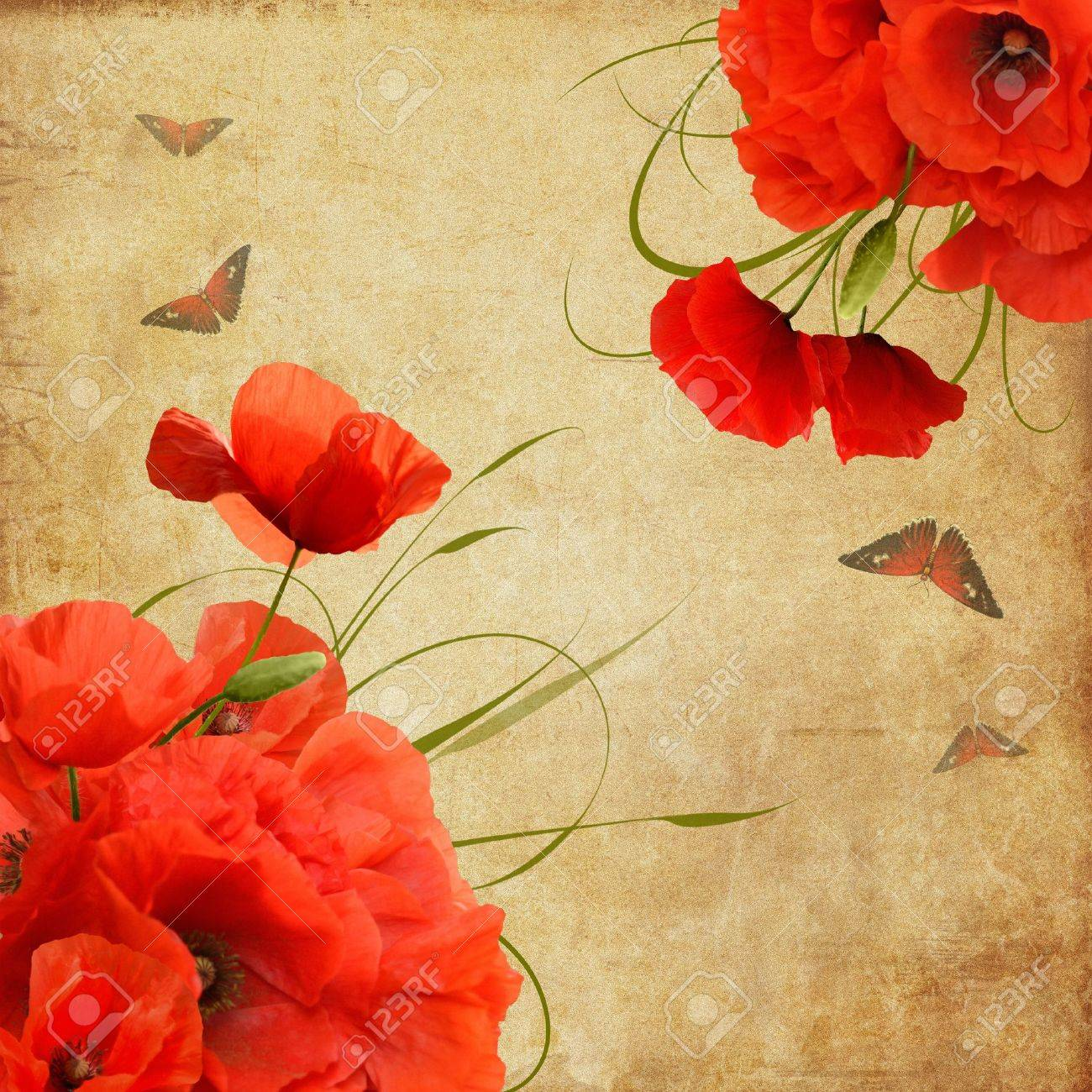 Vintage composition with poppies and butterflies Stock Photo - 19534995