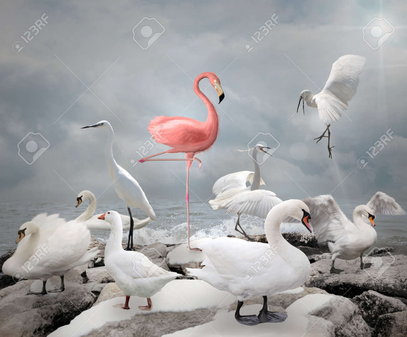 Stand out from a crowd - Flamingo and white birds - 51338060