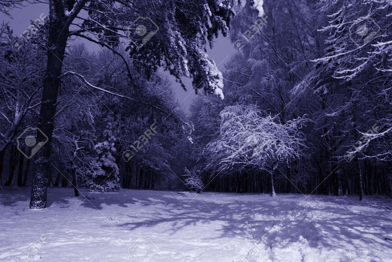 Winter Night Landscape Photography