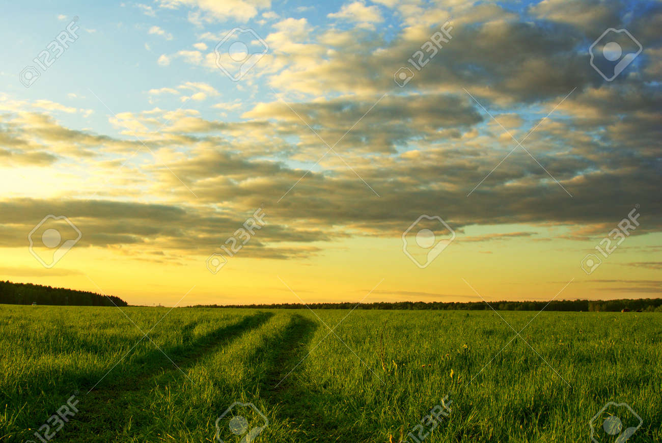 landscape with grass field and dramatic sky at sunset Stock Photo - 11840465
