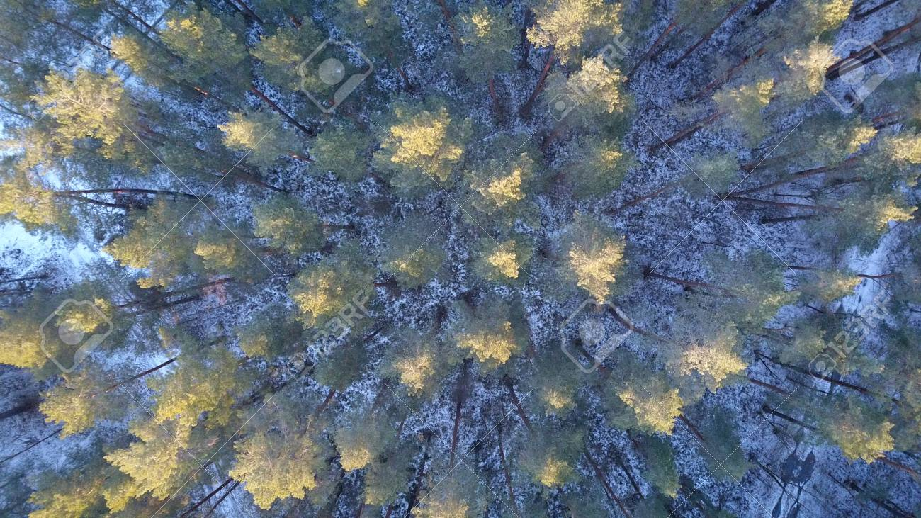 Aerial View Of Winter Forest Covered In Snow Drone Photography Stock Photo