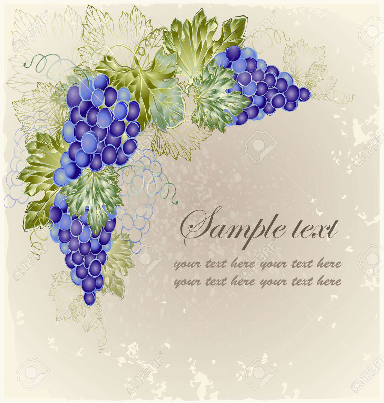 Vintage background with grape branch . Stock Vector - 10827788