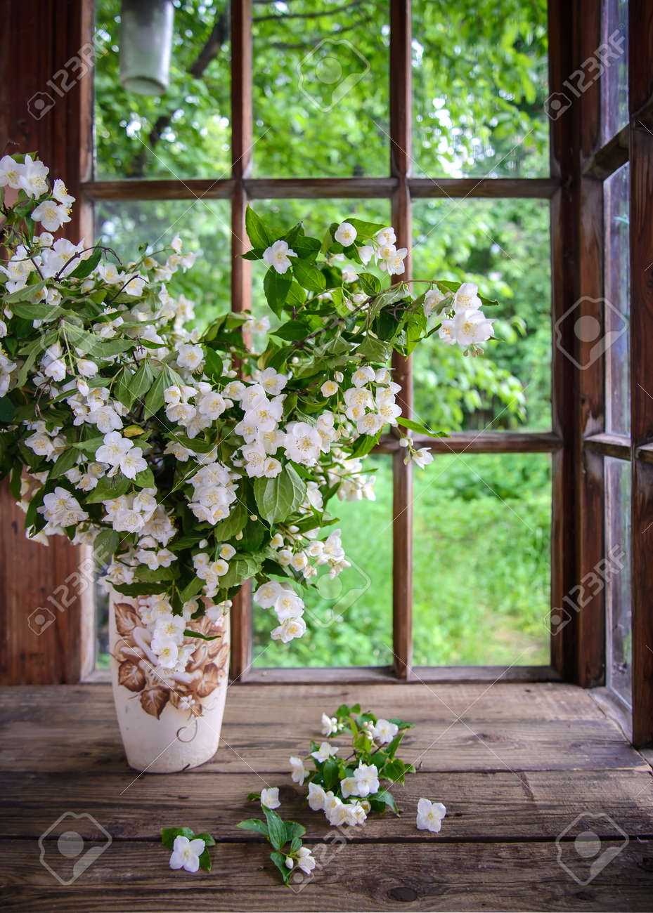 A large beautiful bouquet of Jasmine branches in a vase by a wooden window in the countryside - 150274517