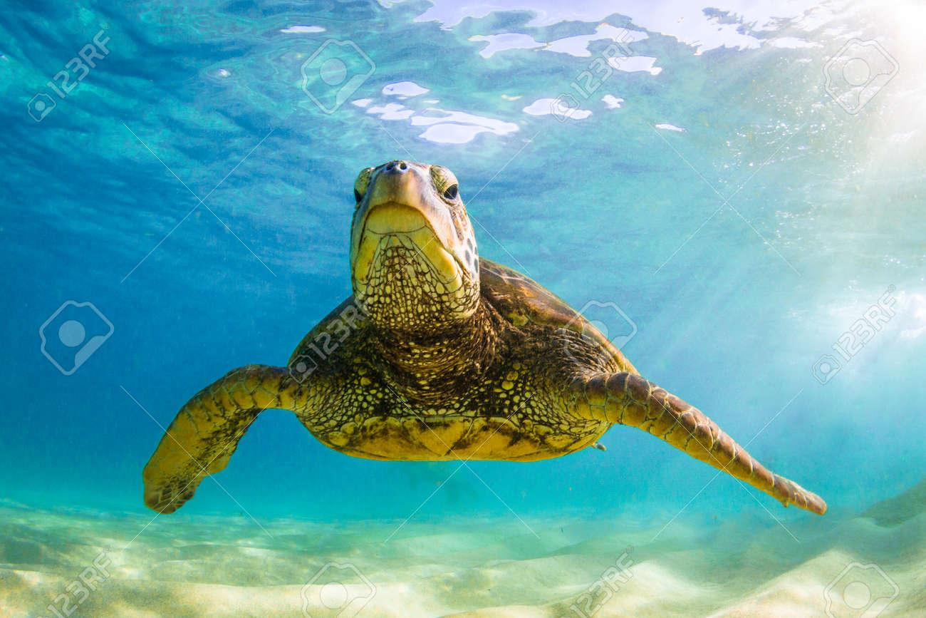 Groß Meeresschildkröte Malvorlagen Zum Ausdrucken Ideen - Beispiel ...