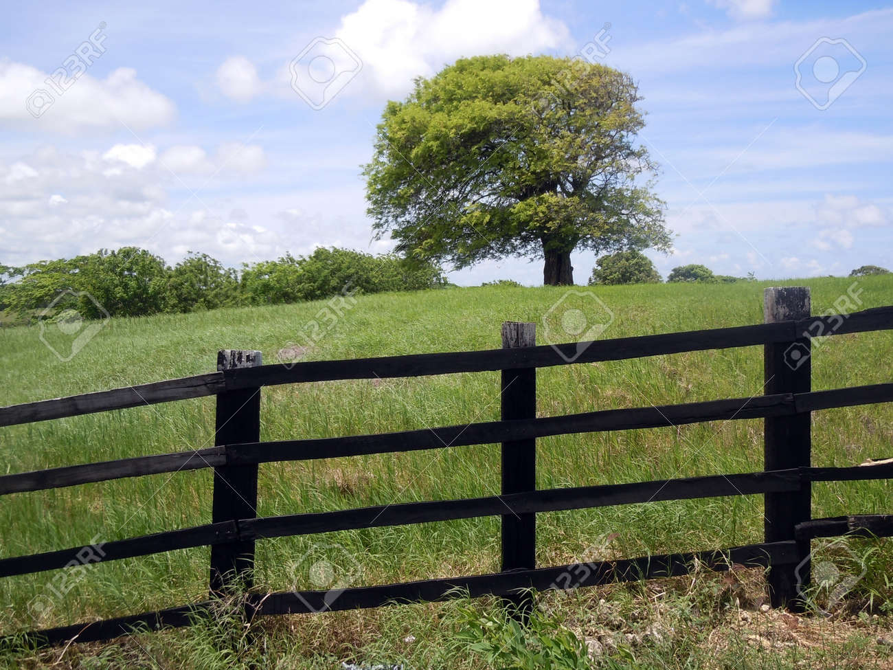 Black fence, tree and green farm field Stock Photo - 7786037