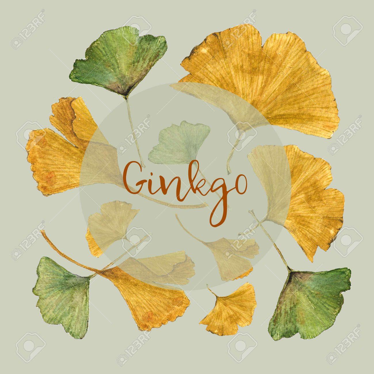 botanical watercolor illustration of colorful ginkgo leaves on