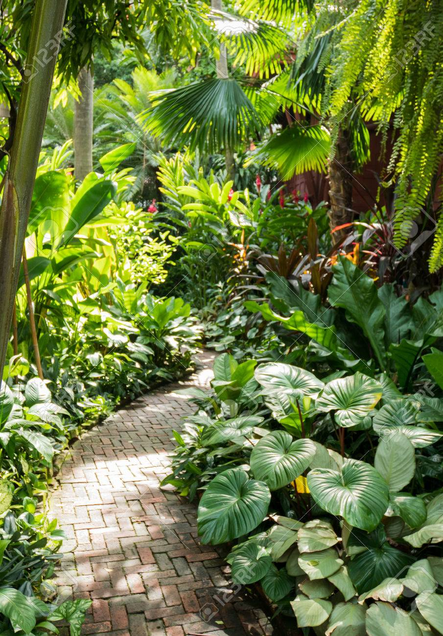 Beautiful Path With Palm Trees In Tropical Garden In Bangkok Stock Photo Picture And Royalty Free Image Image 81778147