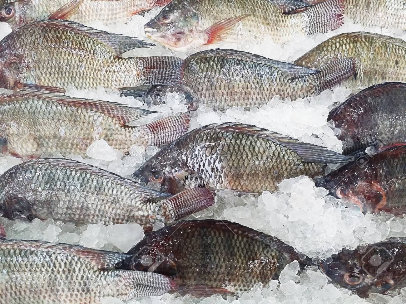 Image result for frozen fishes