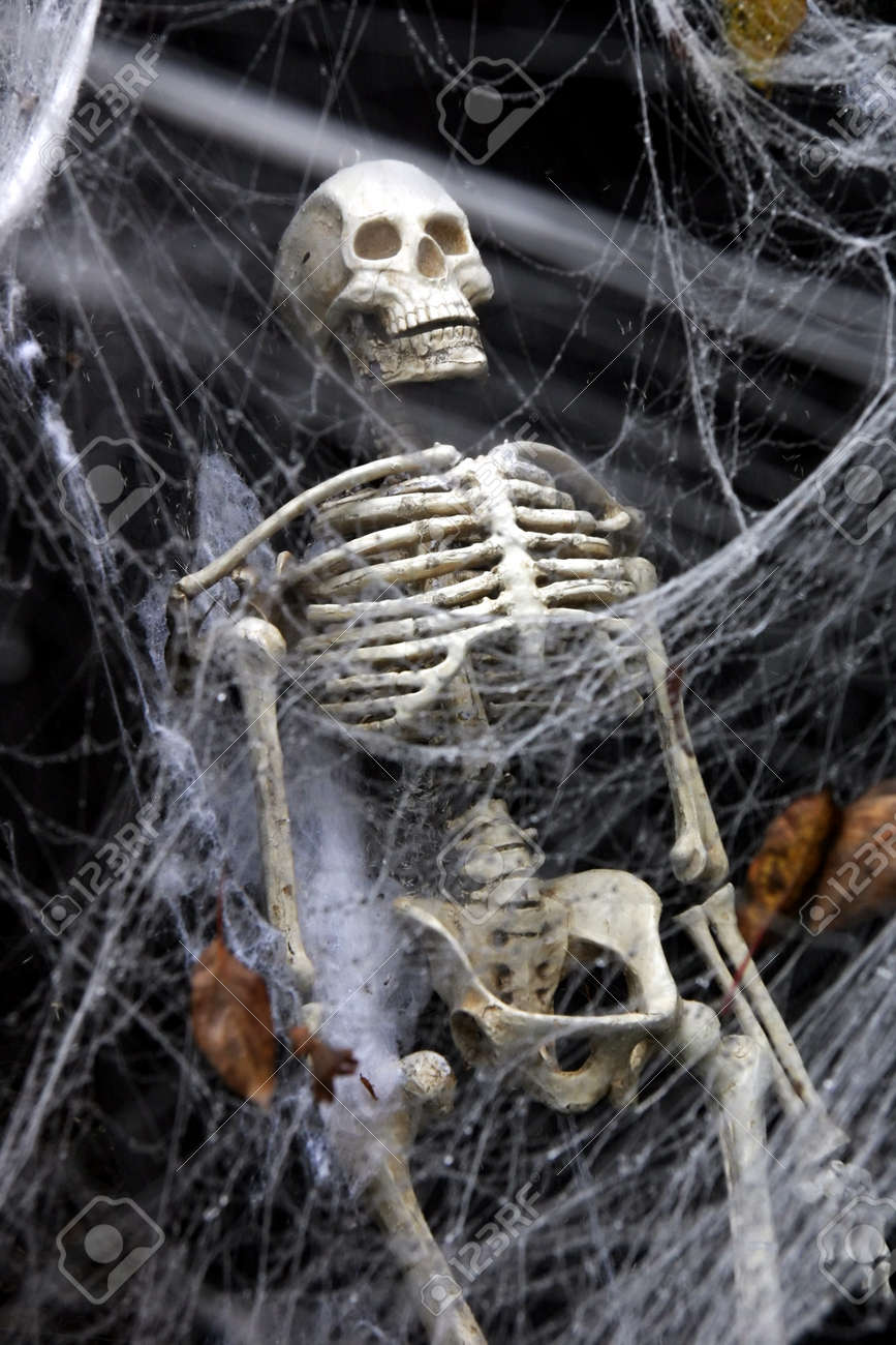 human skeleton in a coffin seen through a thick spider web. stock, Skeleton
