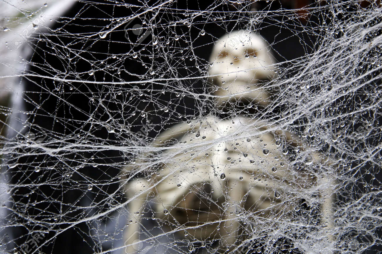 a tangled wet decorative spider web with a human skeleton in, Skeleton