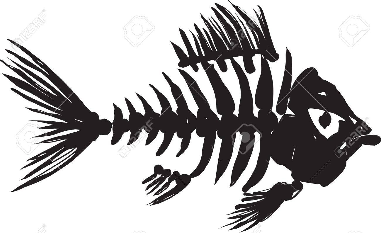 primitive, rough image of fish skeleton in black on a white background Stock Vector - 18243207