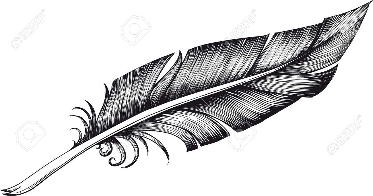 Line Drawing Of Quill : Quill pen royalty free cliparts vectors and stock illustration