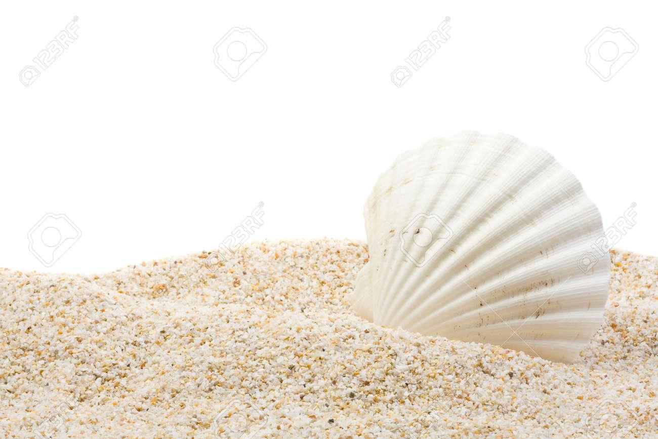 White Shells Close Up On White Sand Stock Photo - Image: 71682536