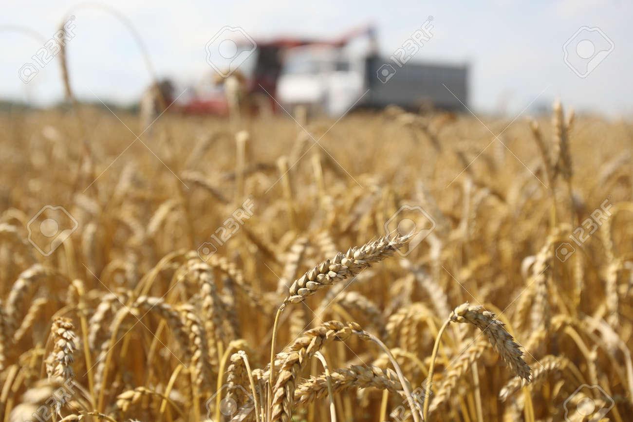 Summer landscape - combine working on a wheat field Stock Photo - 7420645