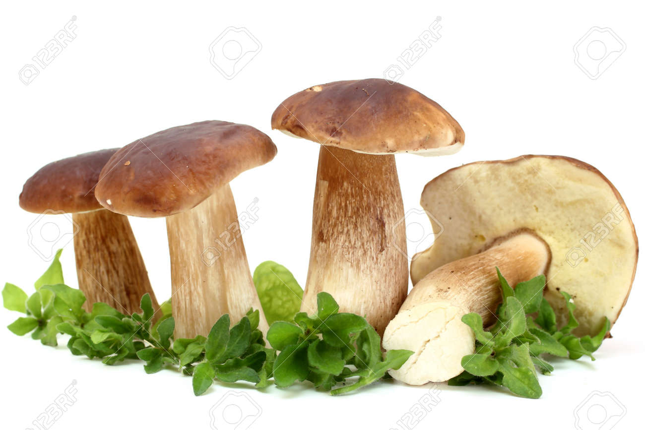 fresh white mushrooms (Boletus edulis) Stock Photo - 7877745